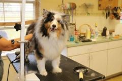 dog-grooming-3