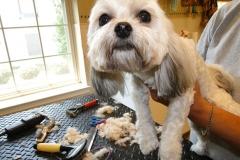 dog-grooming-4