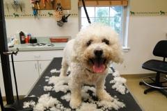dog-grooming-5