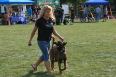 dog-training-3