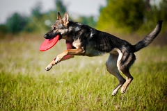 dog-training-main