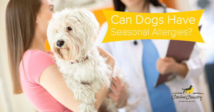 can dogs have seasonal allergies