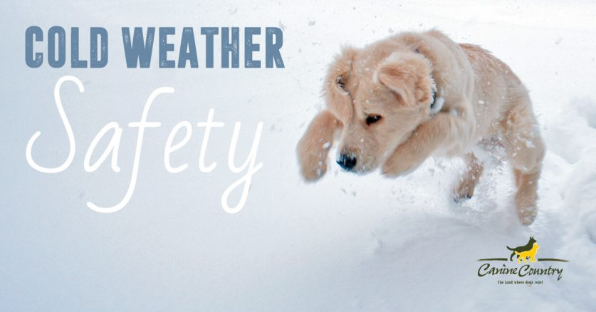 Cold weather safety for your dogs.