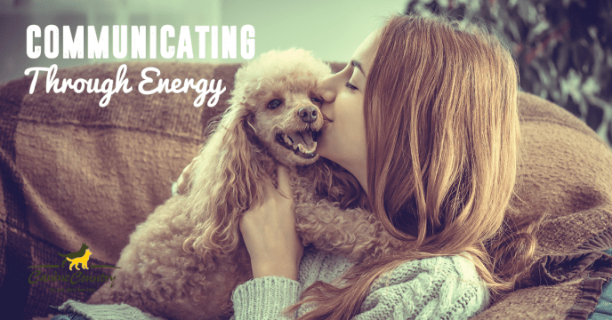 communicating with your dog through energy