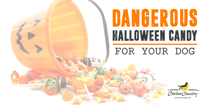 dangerous halloween candy for your dog