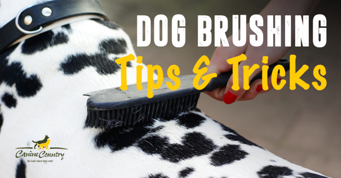 Tips and tricks for brushing your dogs coat.