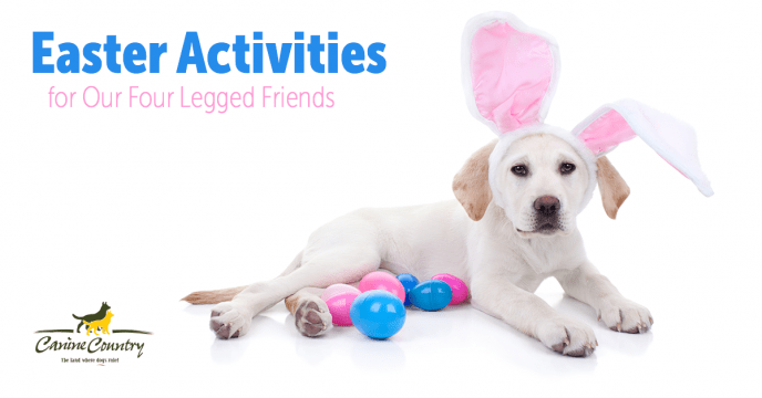 dog easter activities