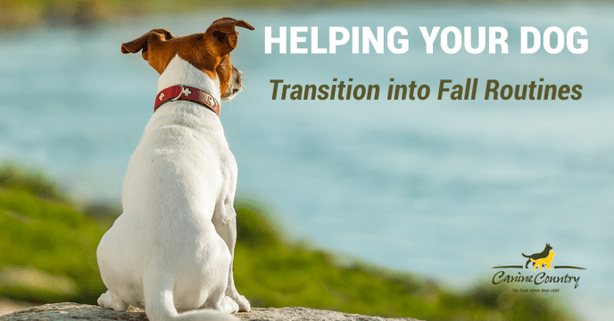 dog fall routine changes