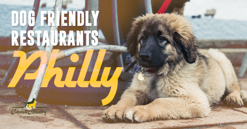 dog friendly restaurants philadelphia