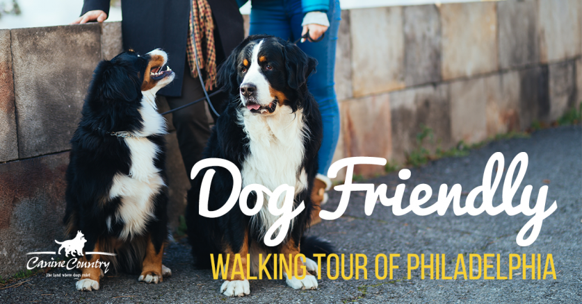 dog friendly walking tour of philadelphia