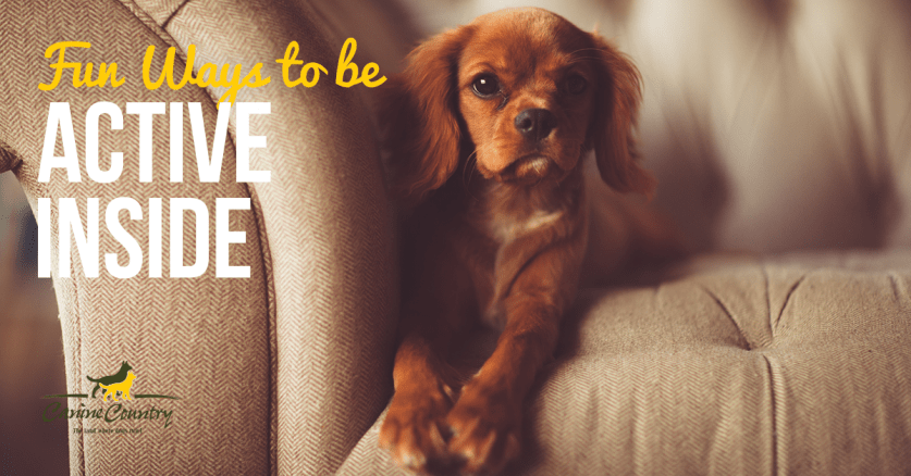 fun ways to be active inside with your dog