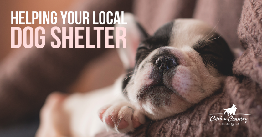 Ways to help your local dog shelter.