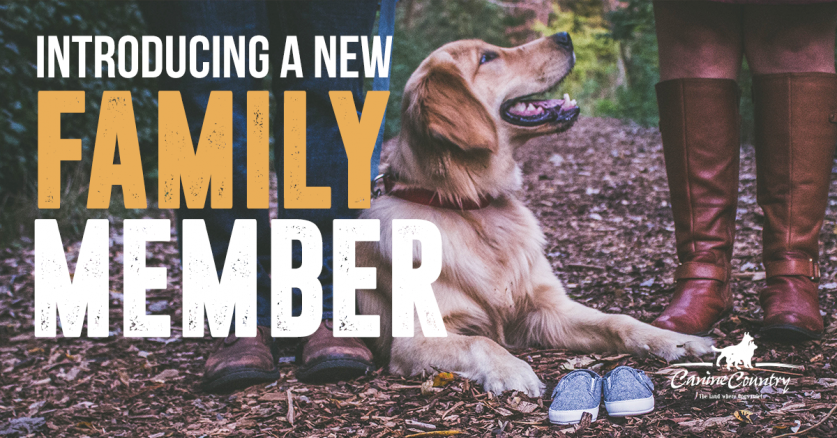 Introducing a new Family Member to your Dog.