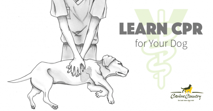 learn cpr for your dog