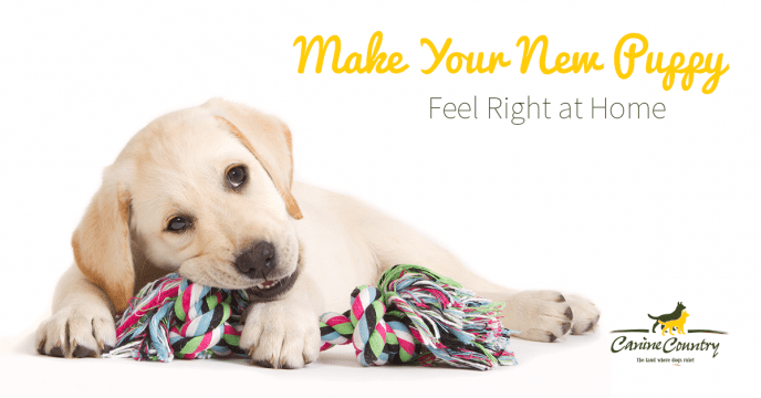 make your new puppy feel at home