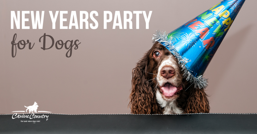 New Years party for dogs.