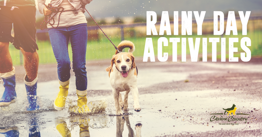 Activities to do on Rainy Days with your Dog.