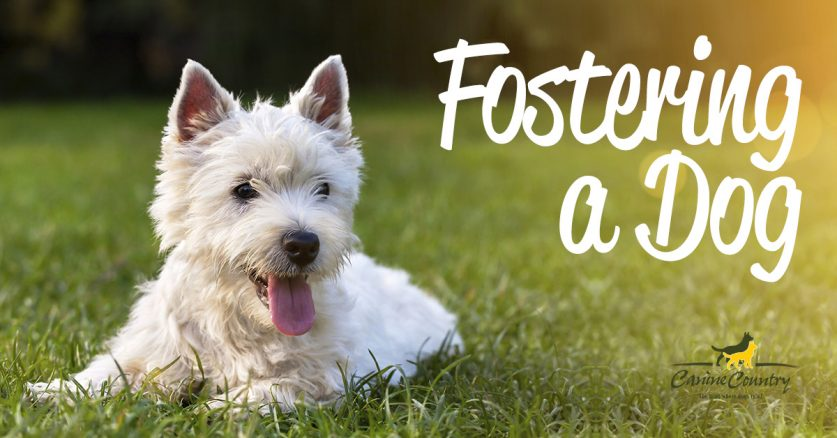 Reasons to foster a dog.