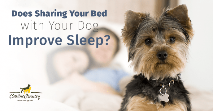 sharing your bed with your dog improve sleep