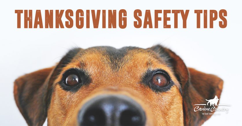 Thanksgiving Dog Safety Tips.