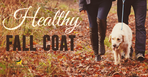 tips to a healthy fall dog coat