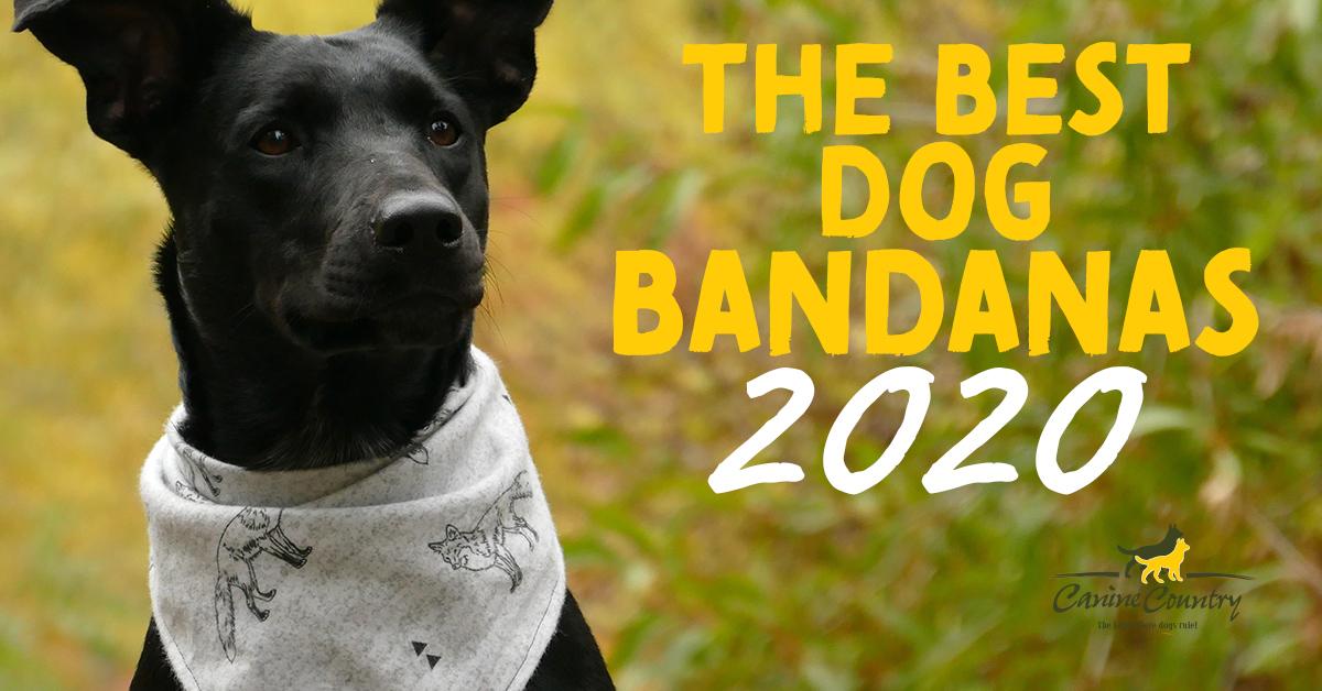 Dog Christmas Bandanas 2021 The Best Dog Bandanas Of 2020 Canine Country