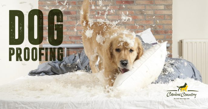 Dog proofing your home.