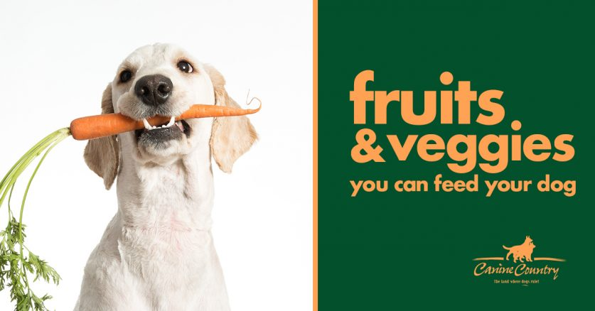 Fruits & Vegetables You Can Feed Your Dog - Canine Country