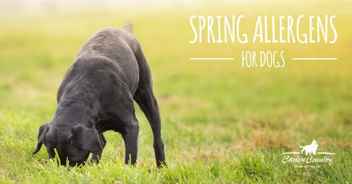 Spring allergens for dogs.